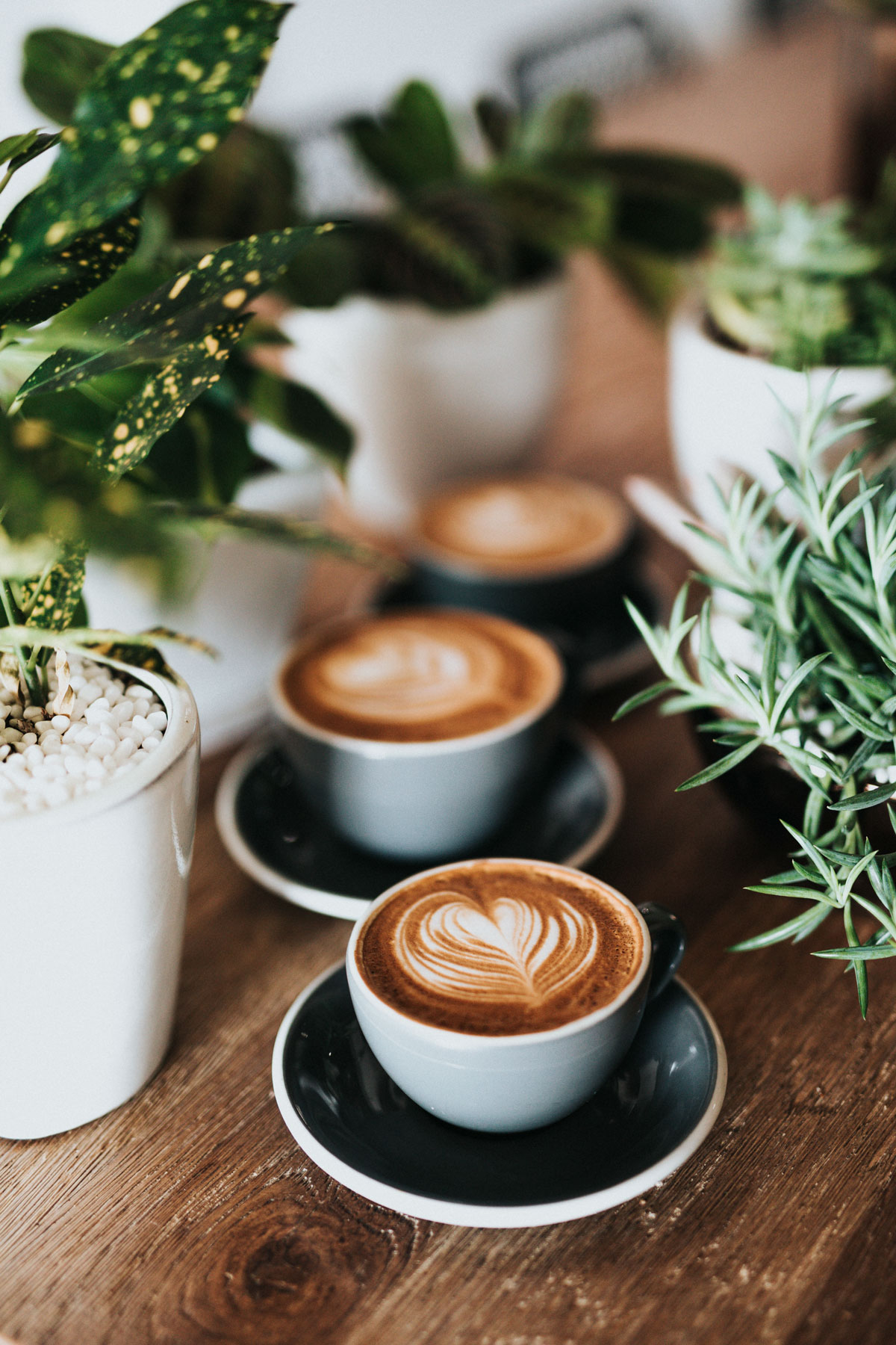 Artcaffe Kenya The Best Coffee in the World: Where to Find the Best Cup