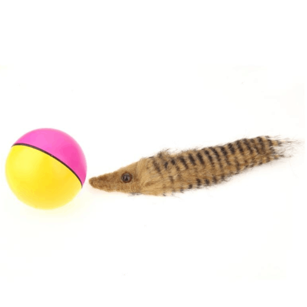 Beaver Ball Pet Toy 4